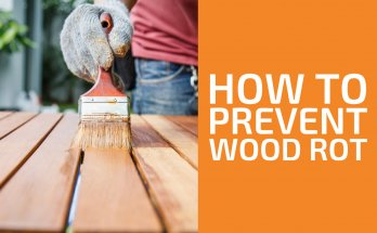 How to Prevent Wood from Rotting